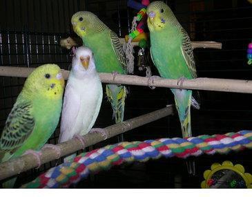 Albino Animals - Birds...
