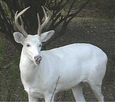 different animals of buck deer youtube