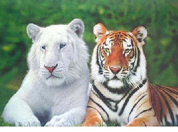 http://grandpacliff.com/Animals/Img-Animals/Img-Albinos/albino-tigers-b.jpg