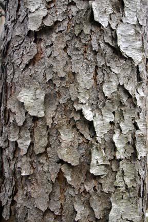Bark Amp Cork Cliff Lamere